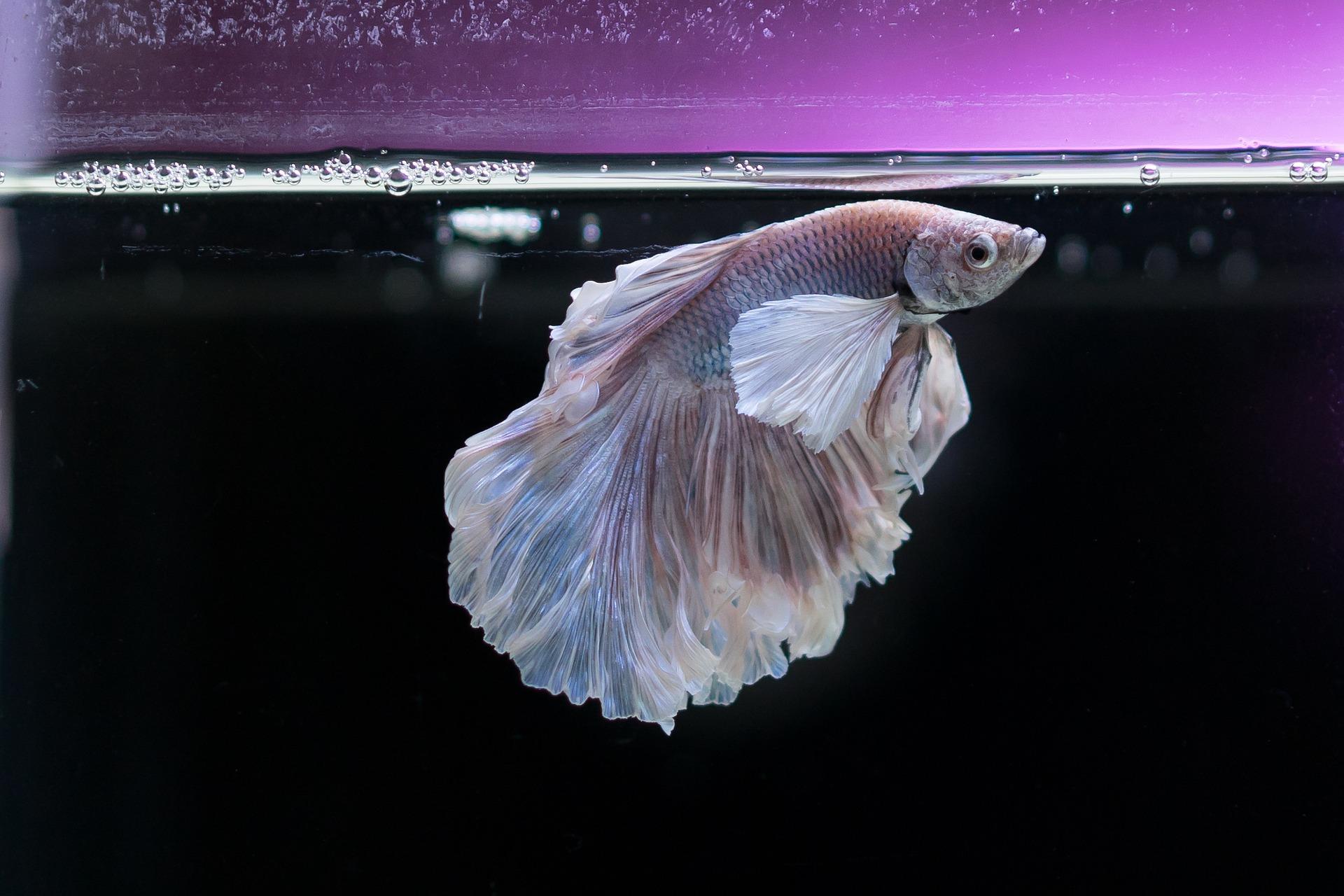 La luce dell'acquario